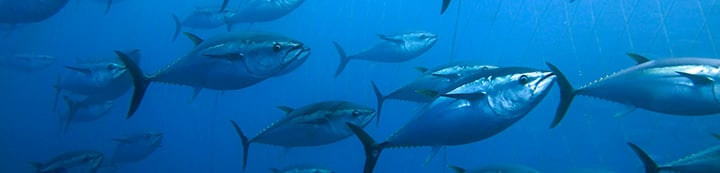 360 Tuna Fishers Forum banner