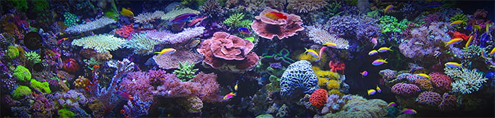 Aquarium Forum banner