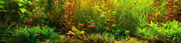 Aquatic Plant Forum banner