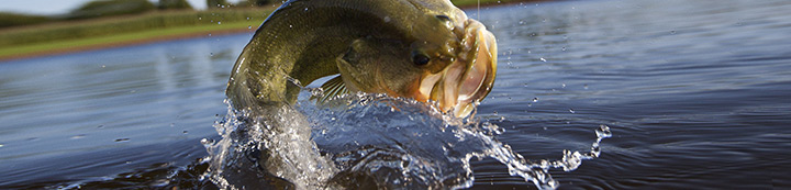 Bass Fishing Forum banner