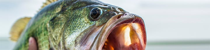 Arizona Fishing Forums on AZBZ banner