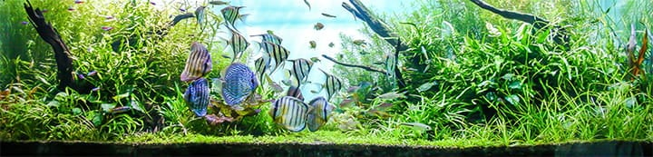 British Columbia Aquariums banner