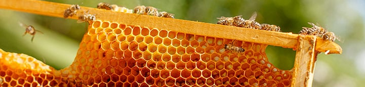 Beekeeping Forums banner