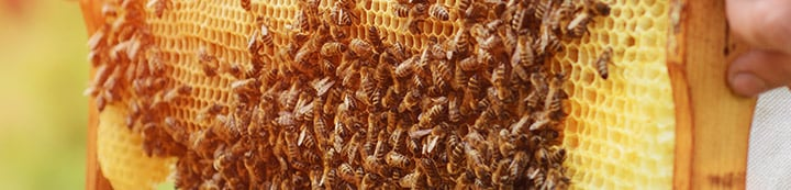 Beesource Beekeeping Forums banner