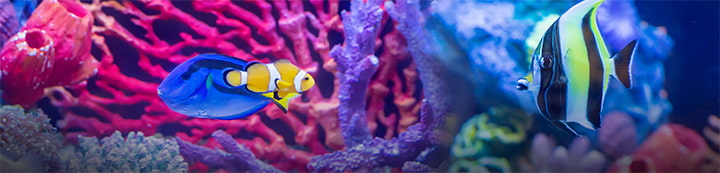 Carolina Fish Talk Forums banner