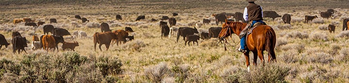 Cattle Forum - Your Online Cattle Resource and Community banner