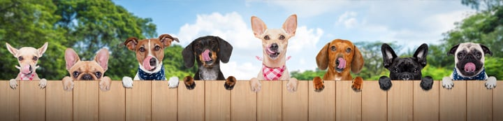 Dog Food Chat banner