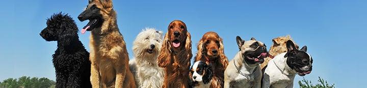 Dog Forum banner