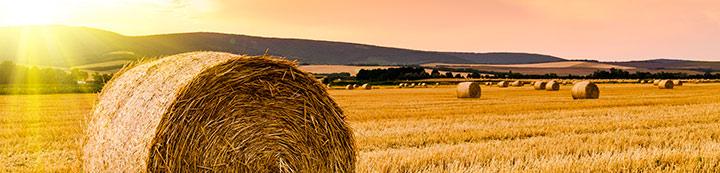 Hay & Forage Forum banner