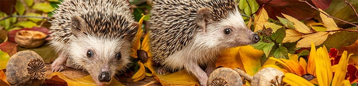 Hedgehog Central banner