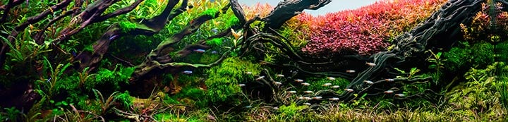 The Planted Tank Forum banner