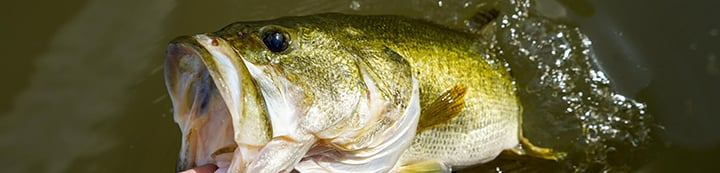 Bass Fishing Forums - The Bassholes banner