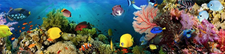 Tropical Fish Keeping banner