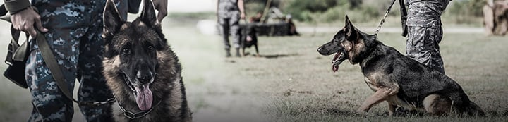 Working Dog Forums banner