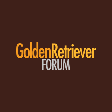 Community avatar for Golden Retriever Forums
