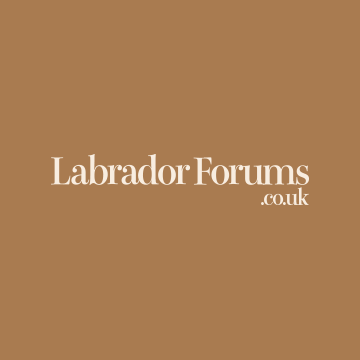 Community avatar for Labradors Forums