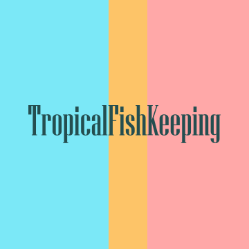 Community avatar for Tropical Fish Keeping